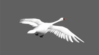Swan 3D Model