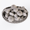 19 16 58 217 015 wicker basket 01 mushrooms  4