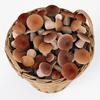 19 21 26 159 005 nipprig mushrooms  4