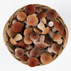 19 21 27 152 006 nipprig mushrooms  4