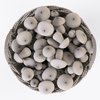 19 21 38 454 016 nipprig mushrooms  4
