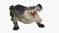 Alligator Animated 3D Model