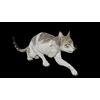 19 58 20 463 catblackpic2 4
