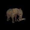 20 28 11 707 elephantblackpic1 4