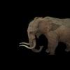 20 28 26 726 elephantblackpic4 4