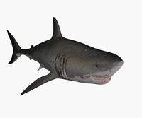 Great White Shark Animated 3D Model