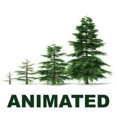 Fir tree animation of growth 3D Model
