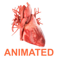 Human heart animated v3 3D Model