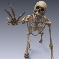 Human skeleton rigged 3D Model