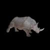 21 43 18 417 rhinoblackpic2 4