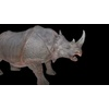 21 43 24 36 rhinoblackpic3 4