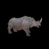 21 43 28 261 rhinoblackpic11 4