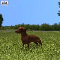 Dashchund 3D Model