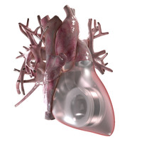 Artificial Human Heart Beating 3D Model