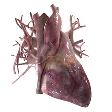 Human Heart Beating High Quality 3D Model