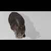 22 24 02 238 hippopotamushdpic2 4