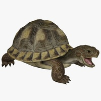 Turtle Animated 3D Model