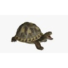 22 40 59 847 turtleblendpic1 4