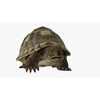 22 41 04 242 turtleblendpic5 4