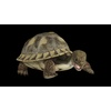 22 45 12 472 turtleblackpic4 4