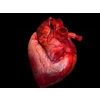 Beating Heart Animated 3D Model