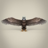 23 18 15 251 low poly realistic eagle 02 4