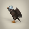23 18 19 455 low poly realistic eagle 03 4