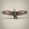 23 18 24 663 low poly realistic eagle 04 4