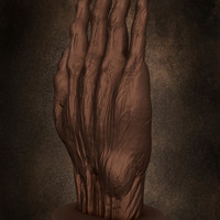 03 final render anatomy of hand by yacine brinis cover