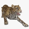 Cheetah Animated 3D Model