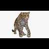 09 47 37 452 cheetahblendpic2 4