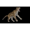 09 47 41 863 cheetahblackpic1 4