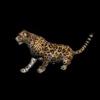09 47 42 556 cheetahblackpic2 4