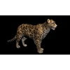 09 47 43 230 cheetahblackpic3 4