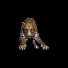 09 47 44 644 cheetahblackpic91 4