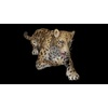 09 47 46 107 cheetahblackpic93 4