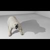 09 55 20 981 polarbearhdpic2 4