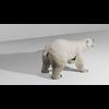 09 55 21 788 polarbearhdpic3 4