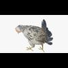 09 55 28 87 chickendisplaypic4 4