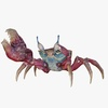 Sea Crab 3D Model