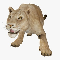 Female Lion Animated 3D Model