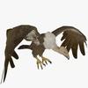 10 14 56 357 buzzardshowpic1 4