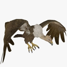 Buzzard Animated 3D Model