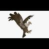10 14 59 204 buzzardshowpic2 4