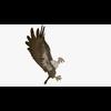 10 15 00 372 buzzardshowpic3 4