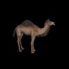 20 39 37 375 camelblackpic1 4
