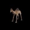 20 39 40 98 camelblackpic4 4