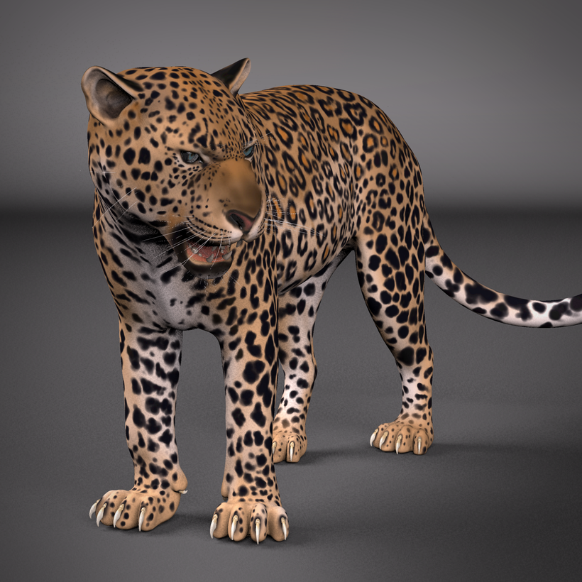 Leopard maya rig 3d model for Mobel 3d download