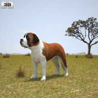 St. Bernard 3D Model