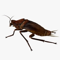 Cock Roach Animated 3D Model